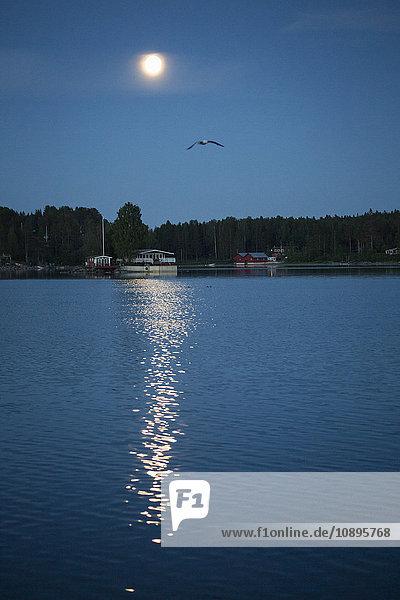 Schweden  Medelpad  Juniskar  Möwe fliegt nachts über das Meer