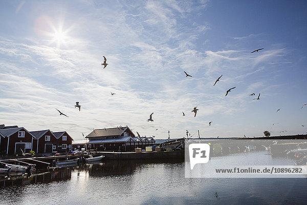 Schweden  Medelpad  Njurunda  Fliegende Vögel über Fluss und Fischerdorf