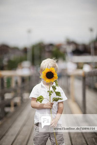 Deutschland  Bayern  Junge (4-5) mit Sonnenblume