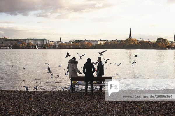 Deutschland  Hamburg  Vogelfütterung am Fluss