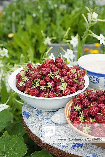 Schweden  Gotland  Bursvik  Burgegard  Frisch gepflückte Erdbeeren in Schalen