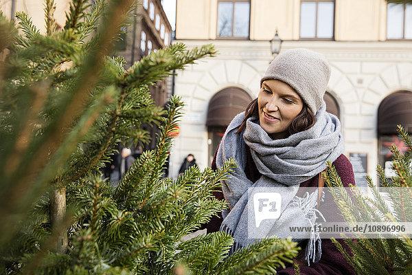 Schweden  Stockholm  Gamla Stan  Frau bei der Wahl des Weihnachtsbaums
