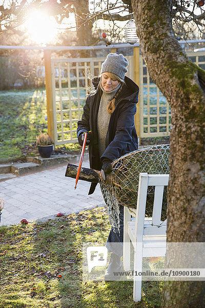 Sweden  Sodermanland  Alvsjo  Woman sawing fir tree on backyard