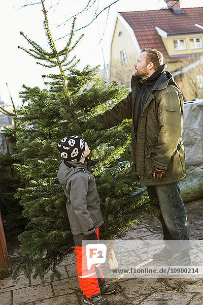 Sweden  Sodermanland  Alvsjo  Father and son (6-7) standing with fir tree on backyard