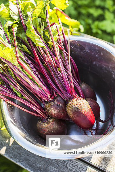 Sweden  High angle view of beetroot in metal bucket