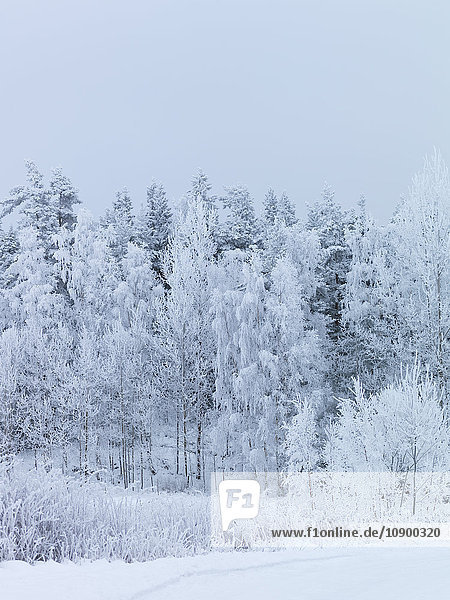 Sweden  Vastra Gotaland  Gullspang  Runnas  Trees covered in snow