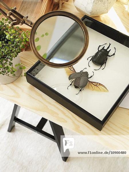 Schweden  Vastergotland  Insektensammlung