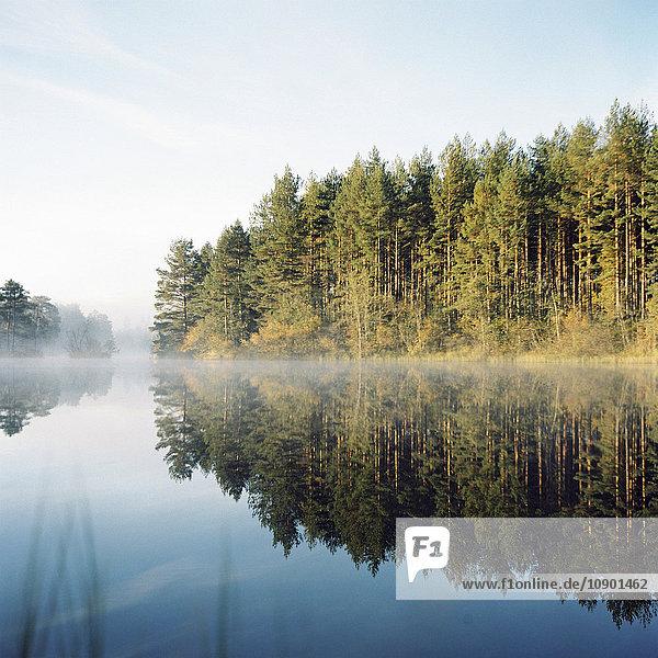 Schweden  Vastmanland  Bergslagen  Silvergruvan  Svartalven  Wald am See im Herbst