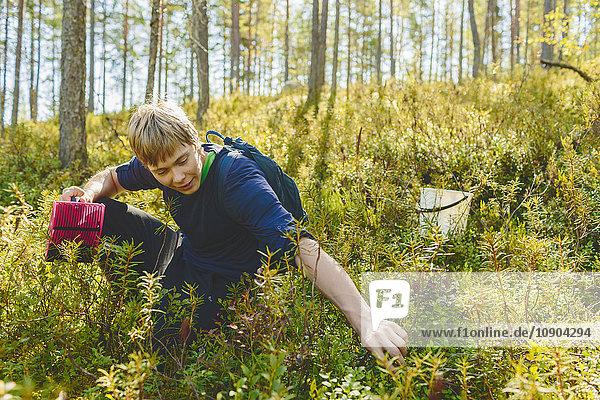 Finnland  Keski-Suomi  Jyvaskyla  Junger Mann  der Blaubeeren erntet
