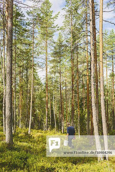 Finnland  Keski-Suomi  Jyvaskyla  Mann beim Wandern im Kiefernwald