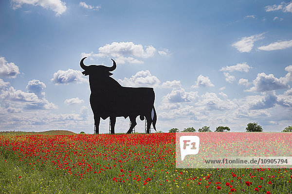 Bull shaped sign in poppy field  Spain  Toledo