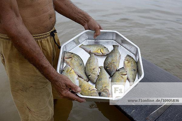 Brazil  Itaituba  Pimental  fishermann with small catch of piranha