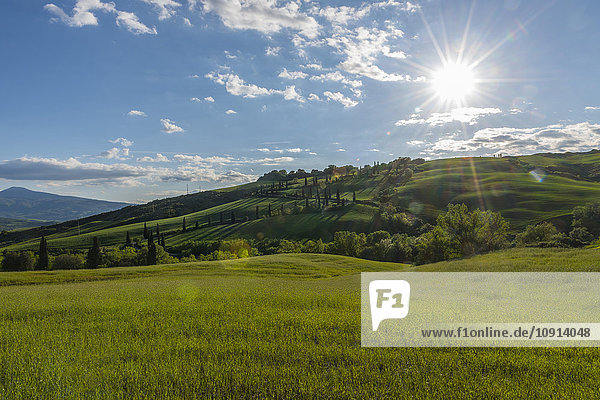Italien  Toskana  Val d'Orcia  Blick auf Felder und Landschaft im Frühjahr
