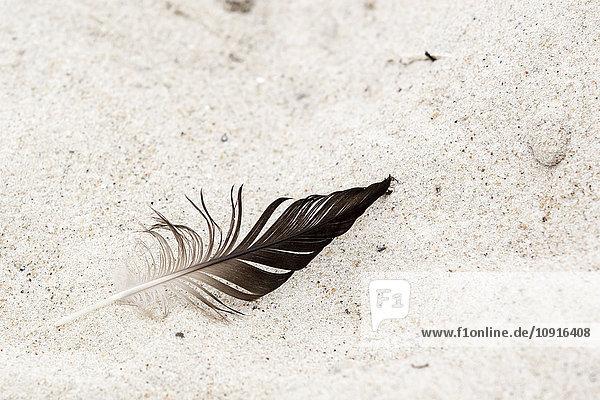 Krähenfeder auf Sand