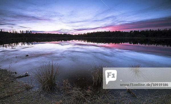 Deutschland  Bayern  Schönramer Moor bei Sonnenuntergang