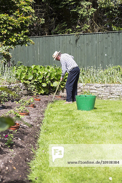Senior man removing weeds in garden