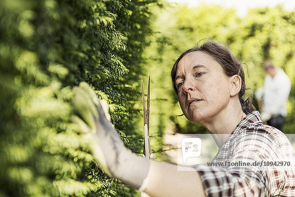 Frau untersucht Pflanzen im Gemeinschaftsgarten
