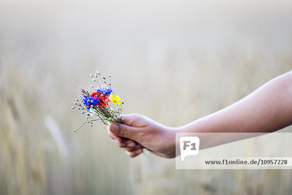 Girl holding flowers against a field of corn  Sweden.