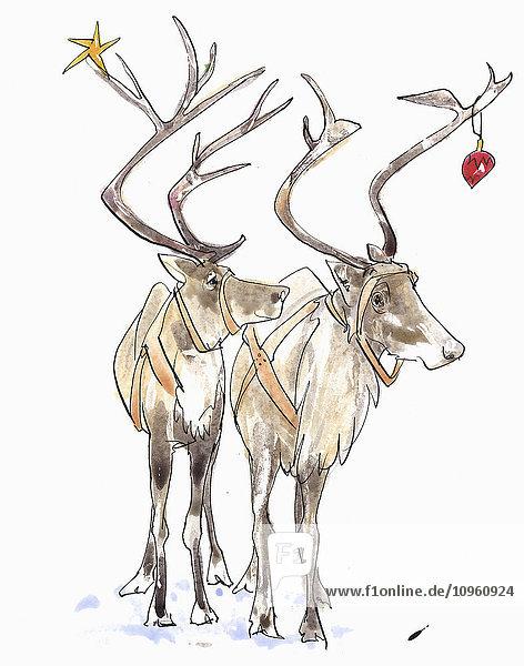 Rentier-Paar mit Weihnachtsdekoration im Geweih