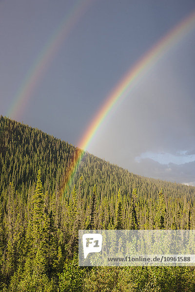 Double rainbow over an evergreen forest  Yukon Territory  Canada  Summer