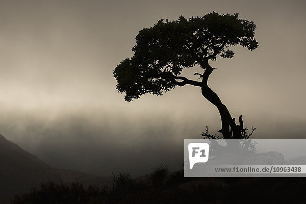 'Silhouette of a tree against a stormy sky in Richtersveld National Park; South Africa'
