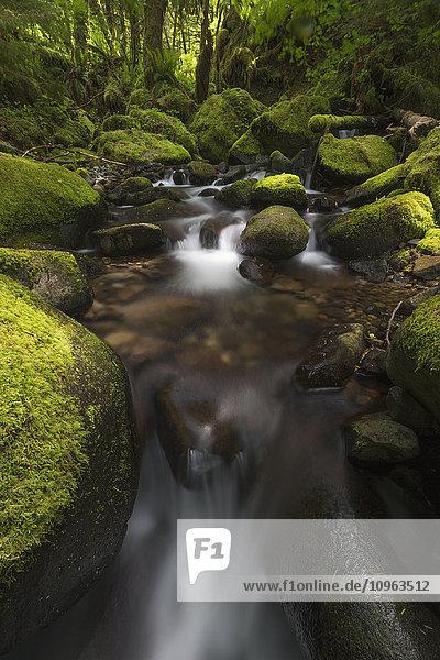 'Ruckel Creek; Oregon  United States of America'