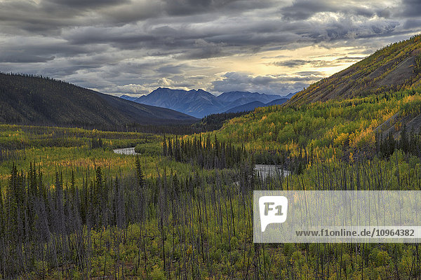 'The trees changing colour as summer gives way to autumn along the South Canol Road and a view of Lapie River; Yukon  Canada'