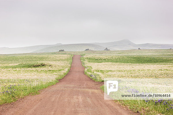Scenic view of a red dirt road surrounded by tundra and wildflowers with foggy hills in the background  St. Paul Island  Southwestern Alaska  Summer