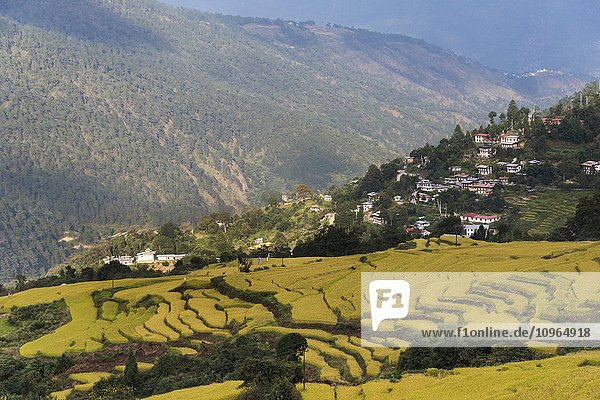 'Rural landscape with terraced farmland; Thimphu  Bhutan'