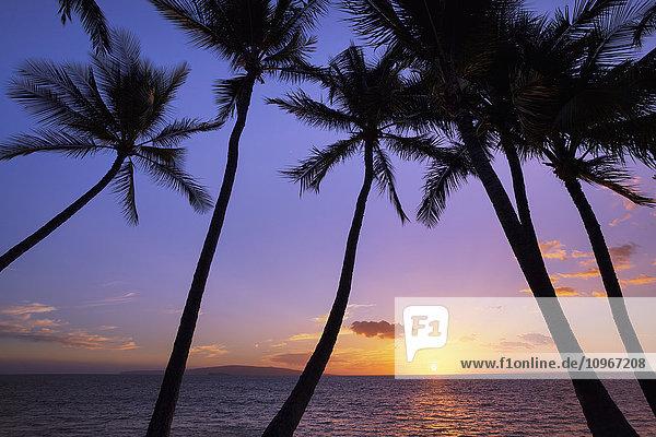 'Silhouetted palm trees at sunset; Wailea  Maui  Hawaii  United States of America'