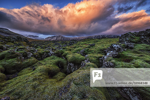 'Moss covered lava flow at sunrise on the Snaefellsness Peninsula; Iceland'