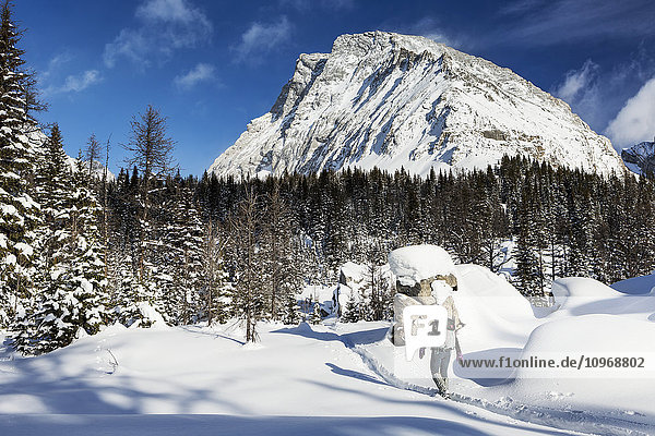 'Female snowshoer on snow trail with snow covered trees and snow covered mountains in the background with blue sky; Kananaskis Country  Alberta  Canada'