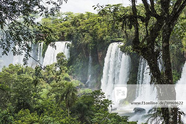 'Line of Iguazu waterfalls seen between trees; Parana  Brazil'