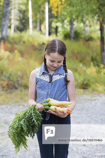 Young girl walking with freshly picked Alaska grown carrots  Palmer  Southcentral Alaska  autumn