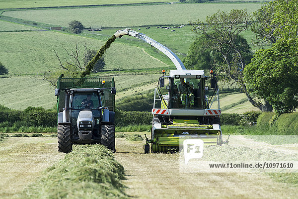 Claas Jaguar 850 self propelled forager chopping grass and loading trailers for silage to be used as winter livestock feed; Cumbria  England