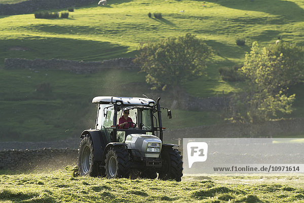 Turning grass in a traditional hay meadow  with a Hurlimann tractor and tedder  Yorkshire Dales National Park; Swaledale  England