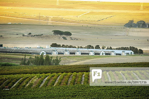 Vineyard and farmland at dusk; Stellenbosch  Western Cape  South Africa