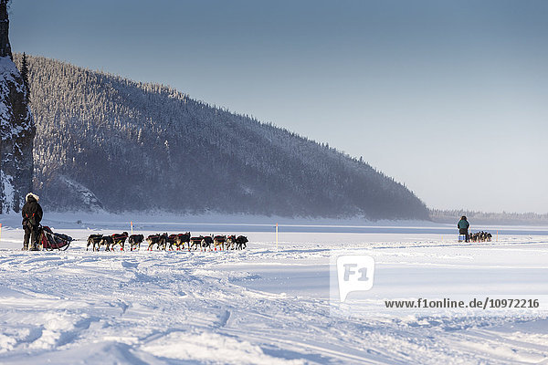 Anna Berington follows Jodi Bailey down the Yukon River in the morning after leaving the Ruby checkpoint during Iditarod 2015