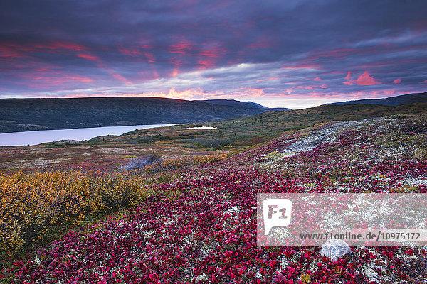 Sunset over fall colors at Wonder Lake  Denali National Park & Preserve  Alaska.