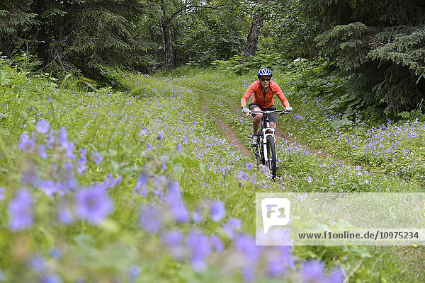Woman mountain biker rides through a field of wild geraniums at Kincaid Park in Anchorage  Alaska