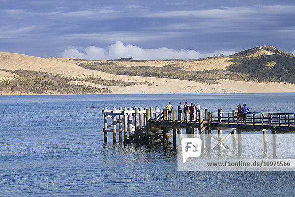 'Looking out into the Tasman Sea from the beachfront in the Hokianga Harbor  a killer whale swims close by the shore; Omapere  Northland  New Zealand'