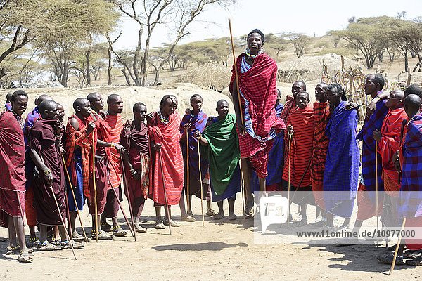 'Maasai warriors wearing brightly coloured clothing perform traditional dance  Ngorongoro Crater Conservation Area; Tanzania'