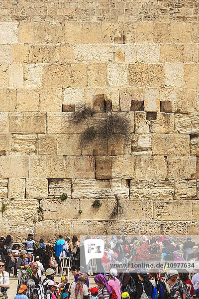 'Tourists and Orthodox jews at the Wailing Wall; Jerusalem  Israel' 'Tourists and Orthodox jews at the Wailing Wall; Jerusalem, Israel'