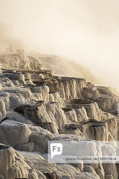 'Morning light burns through heavy steam at Mammoth Springs  Yellowstone National Park; Wyoming  United States of America'