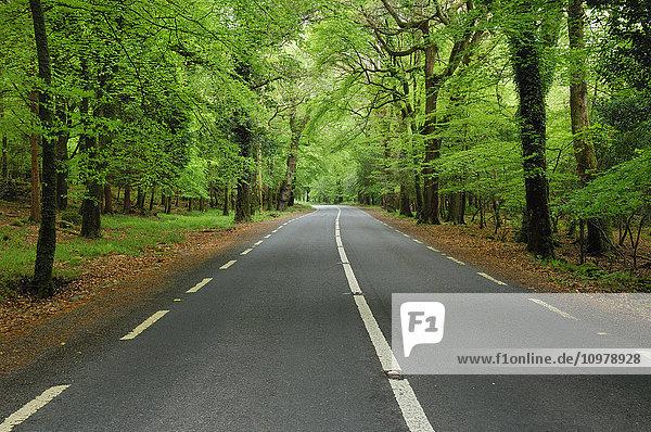 'Road through forest in Killarney National Park; Killarney  County Kerry  Ireland'