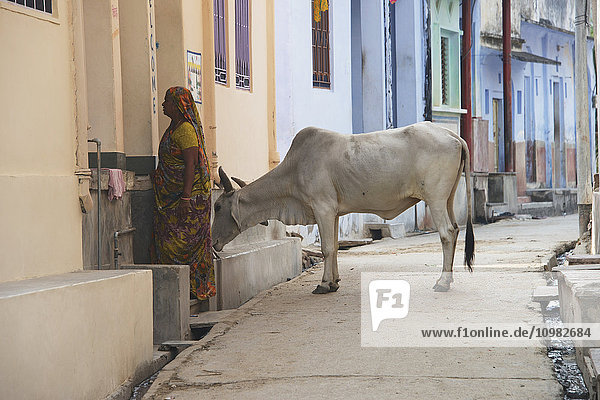 'Woman with a cow in a street; Dharpatha Mal  Madhya Pradesh  India'