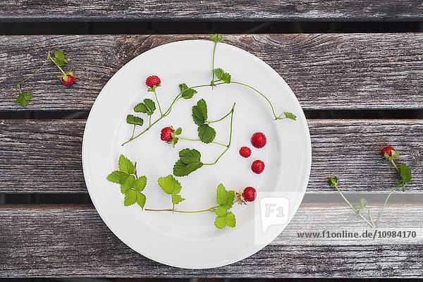 Walderdbeeren  Blätter und Ranken auf dem Teller