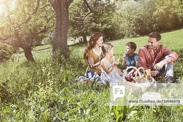 Familie beim Picknick auf der Wiese