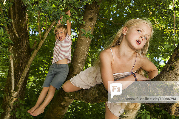 Little boy and his sister climbing on a tree in the forest