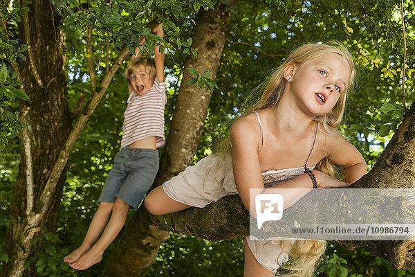 Der kleine Junge und seine Schwester klettern auf einen Baum im Wald.